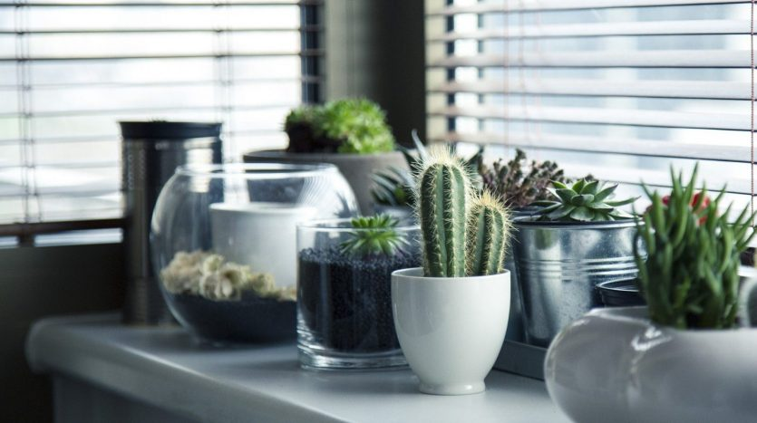 City How to Care for Succulents
